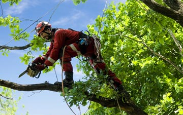 find trusted rated Ballymoney tree surgeons